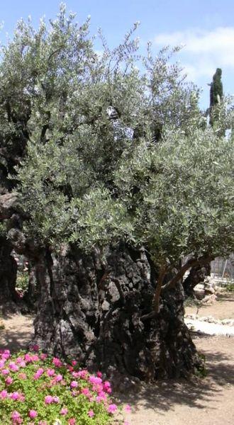 oliviernetzer.jpg