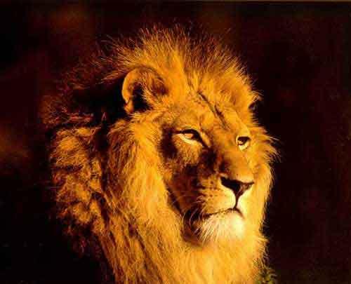 lionprisonjerusalem.jpg